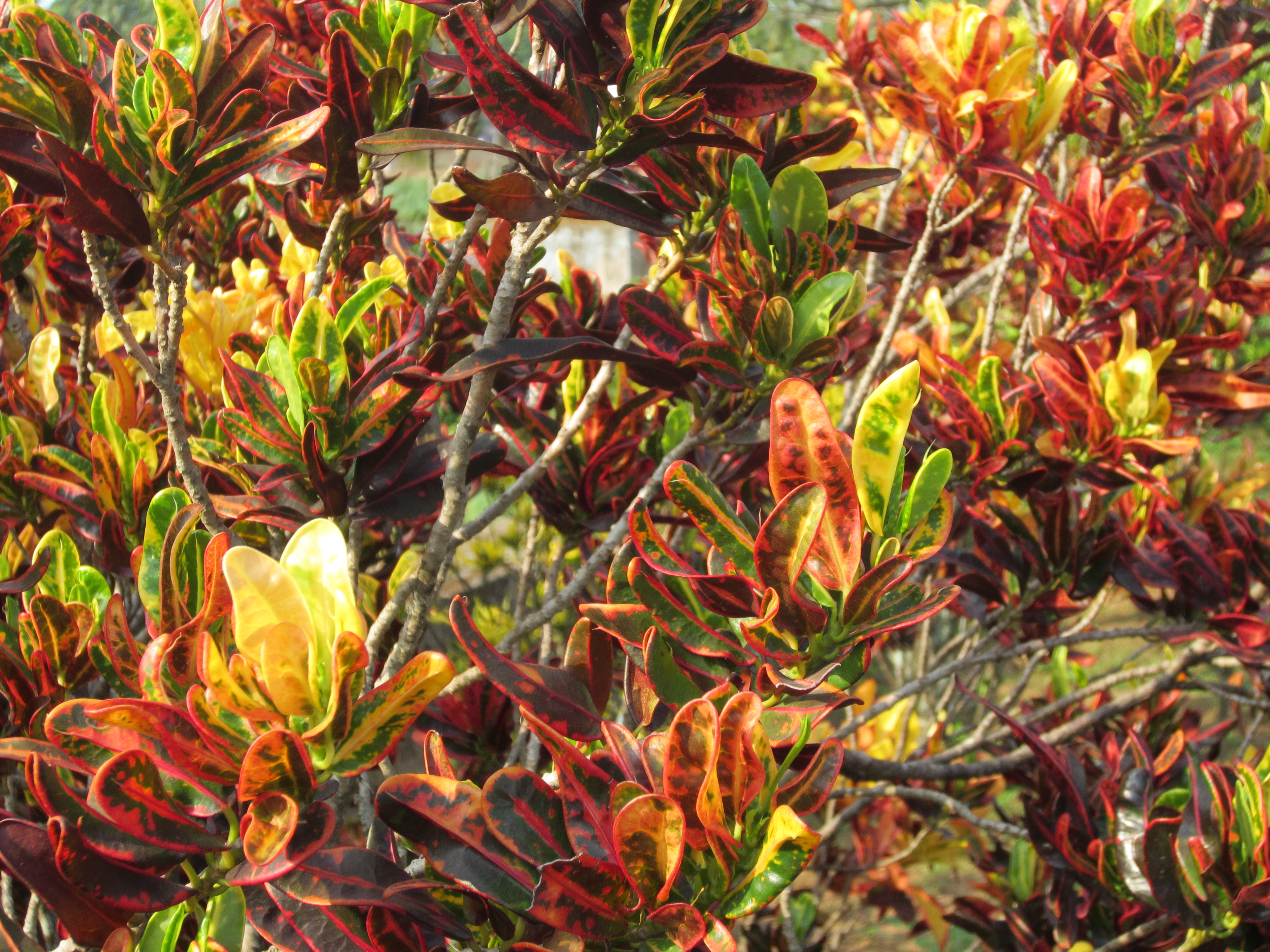 color tree bush - photo #42